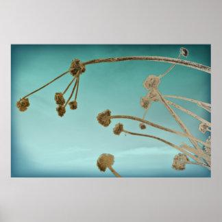 Tallos de flor secados contra un cielo del trullo impresiones
