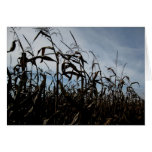 Tallos del maíz de Blank_Breezy Tarjetas