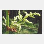 Tallos florecientes del ruibarbo pegatina rectangular