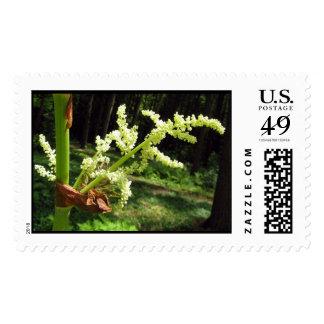 Tallos florecientes del ruibarbo - sello grande