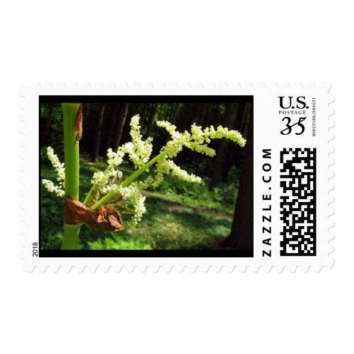 Tallos florecientes del ruibarbo - sello medio