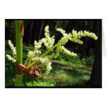 Tallos florecientes del ruibarbo tarjeta de felicitación