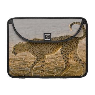 Tallos jovenes del guepardo (Acinonyx Jubatus) Fundas Macbook Pro