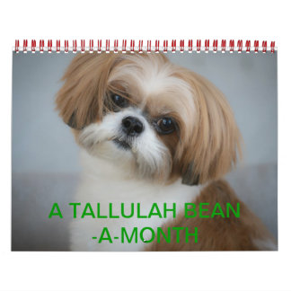 Tallulah Bean Calendar Cute Shih Tzu 2014