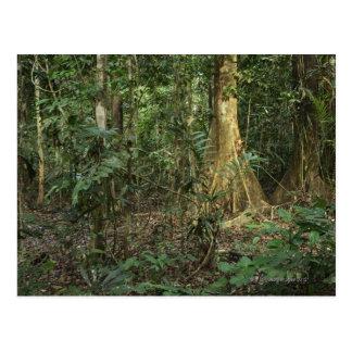 Taman Negara National Park, Pahang, Malaysia Postcard