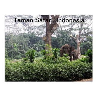 Taman Safari Post Card
