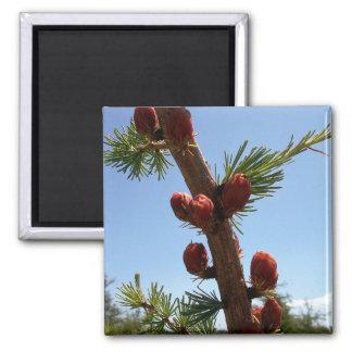 Tamarack Larch Foliage 2 Magnet