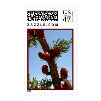 Tamarack Larch Foliage 2 Stamp