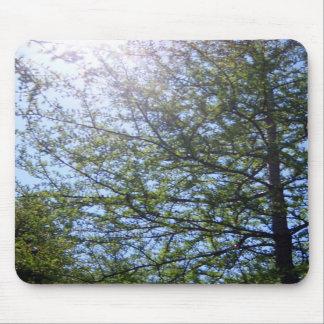 Tamarack Larch Tree 2 Mousepad