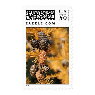 Tamarack (Larch) Tree in the Fall Postage