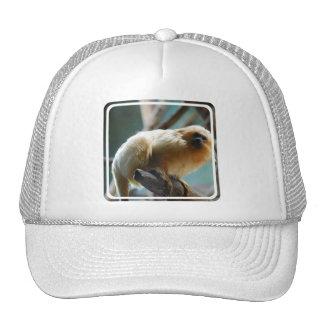 Tamarin Baseball Hat