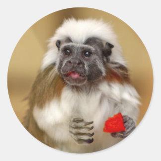 Tamarin Cotton Top monkey stickers