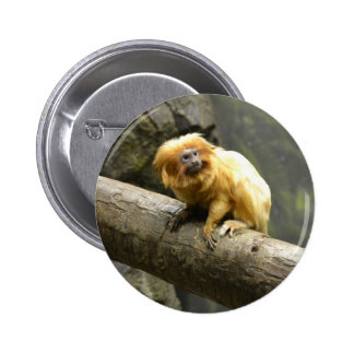 Tamarin de oro del león pin redondo de 2 pulgadas