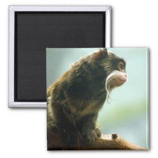 Tamarin Monkey Magnet magnet