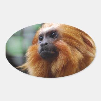 Tamarin Monkey Oval Sticker