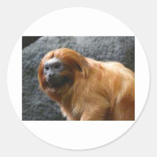 tamarin monkey classic round sticker