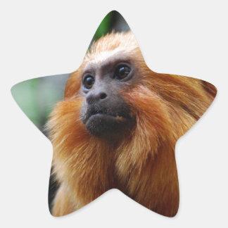 Tamarin Monkey Star Sticker