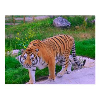 Tambin - tiger at noah's ark,UK Postcard