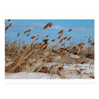 Tame a Wild Wind-horizontal Postcard
