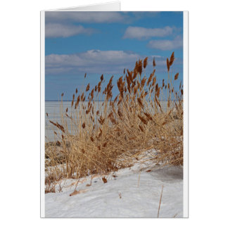 Tame a Wild Wind II Card