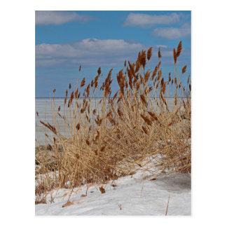 Tame a Wild Wind II Postcard