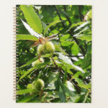 "Tame chestnuts with dragonfly planner<br><div class=""desc"">Tame chestnut tree in my garden.</div>"