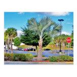 Tampa-Florida Postcards