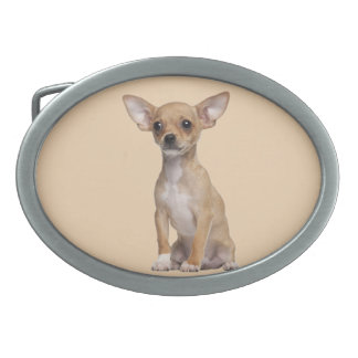 Tan and White Chihuahua Belt Buckle