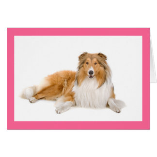 Tan And white Collie Puppy Dog Blank Note Card