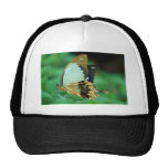 Tan Pale Blue and Black Butterfly Cap