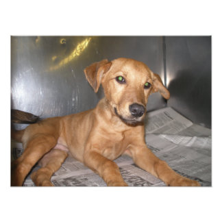 Tan Puppy in Stainless Steel Cage at Dog Pound Photo Art