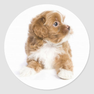 Tan & White Havanese Puppy Dog Sticker