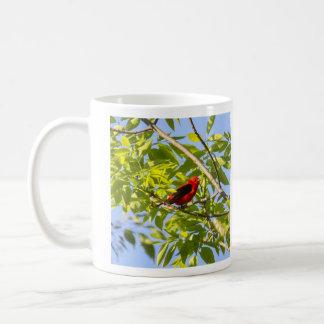 Tanager de escarlata taza clásica