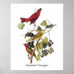 Tanager de verano de Juan Audubon Poster