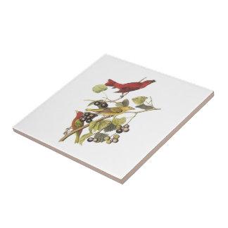 Tanager de verano por Audubon Azulejo Cuadrado Pequeño