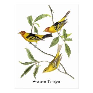 Tanager occidental - John James Audubon Tarjeta Postal