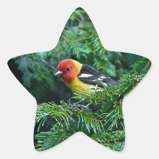 Tanager occidental pegatina en forma de estrella