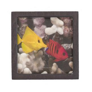 Tang amarillo cajas de joyas de calidad