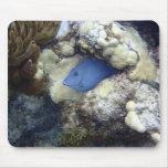 Tang azul, isla de Gran Caimán Tapete De Raton