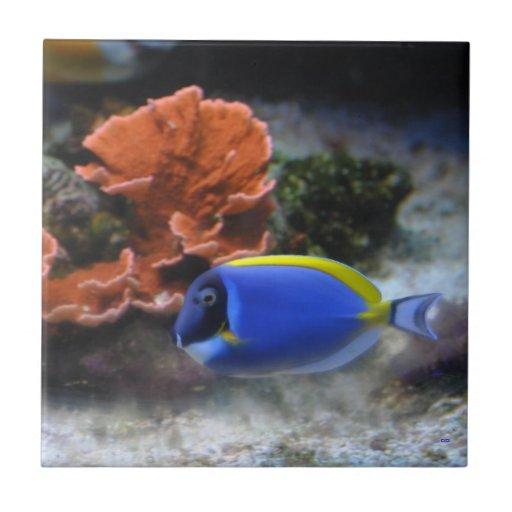 Tang azul y coral azulejos ceramicos