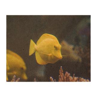 Tang Fish Photo Cork Paper