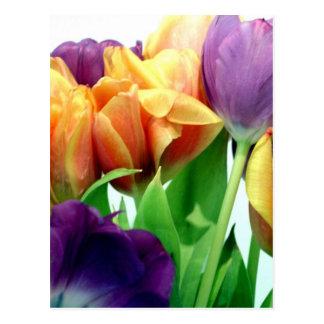Tangerine and Lavender Tulips Postcard