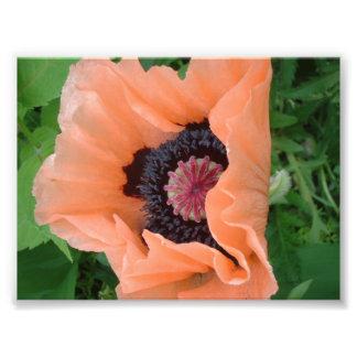 Tangerine colored poppy 2 photographic print