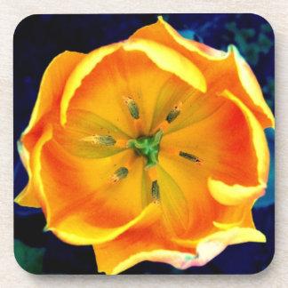 Tangerine Plastic/Cork Coaster (Set of 6)