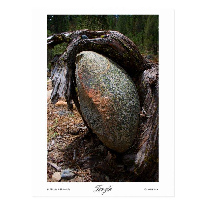 Tangle Prints Postcard