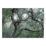 Tangled Oak Trees in Paso Robles, California Card