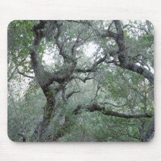 Tangled Oak Trees in Paso Robles, California Mouse Pad