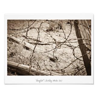 """Tangled"" Photo"