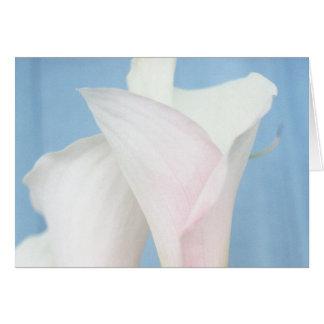 Tango White Calla Lily Photo Art Greeting Card