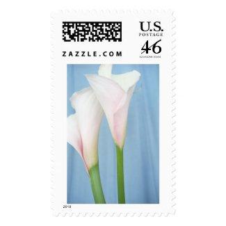Tango White Calla Lily Postage Stamp